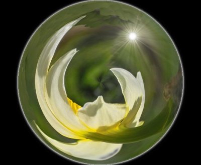 White Daffodill Globe Ornament